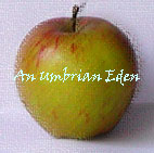 apple umbrian eden copy